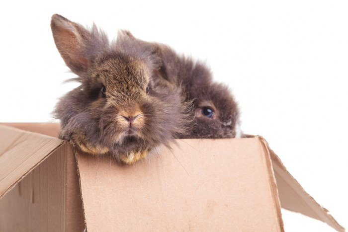 moving with bunnies