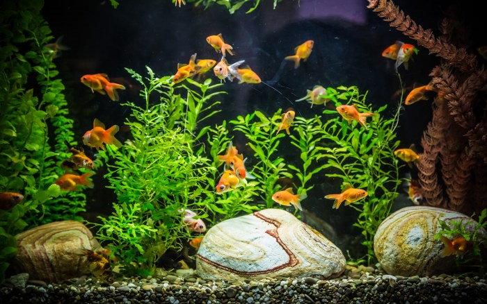 moving your aquarium