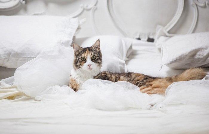 cat's routine