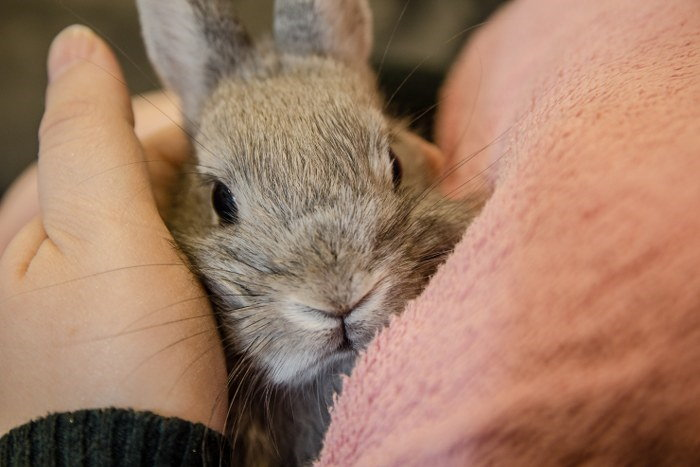 transporting a bunny