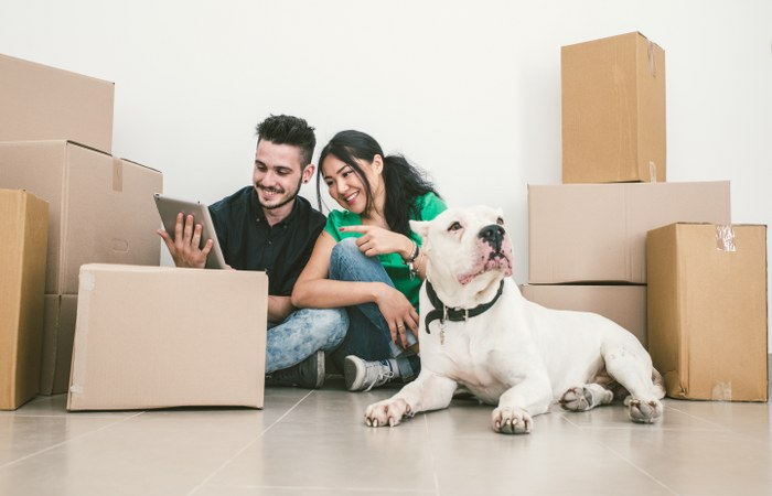 house removals with pets