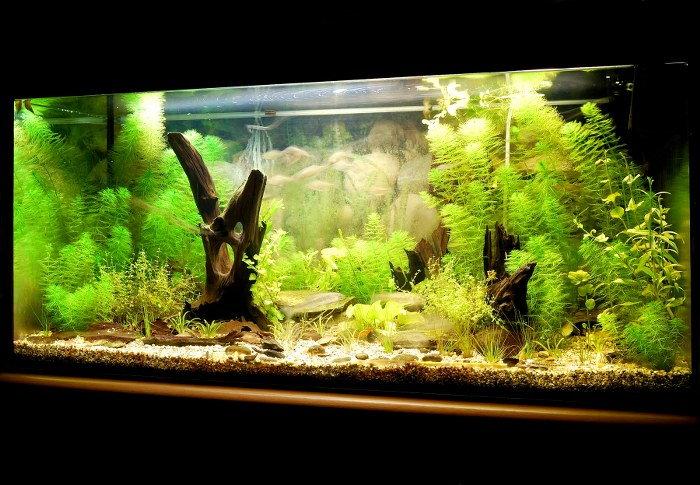 move aquarium plants
