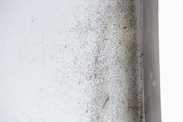 mould specialist